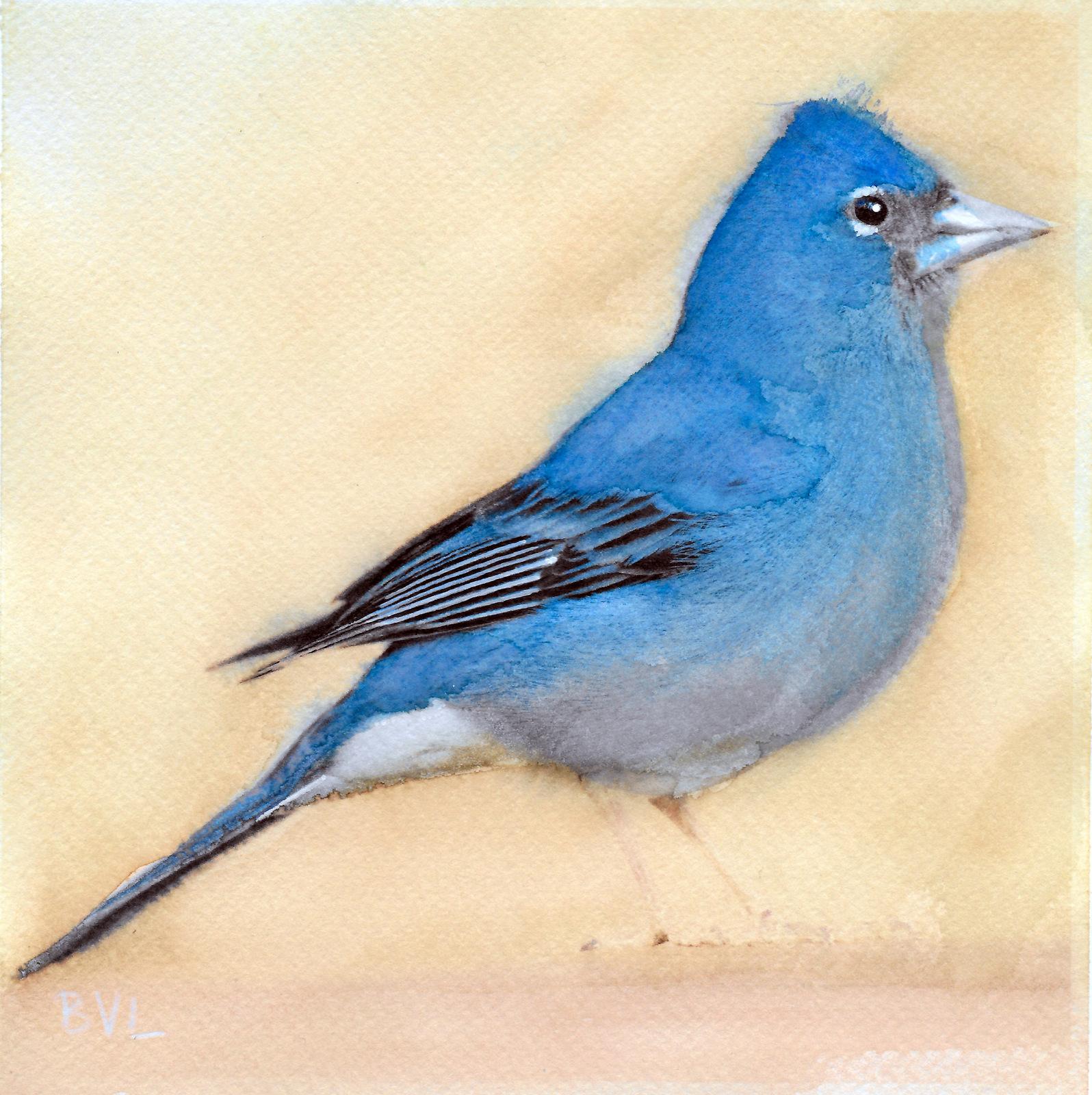 Tenerif Blue