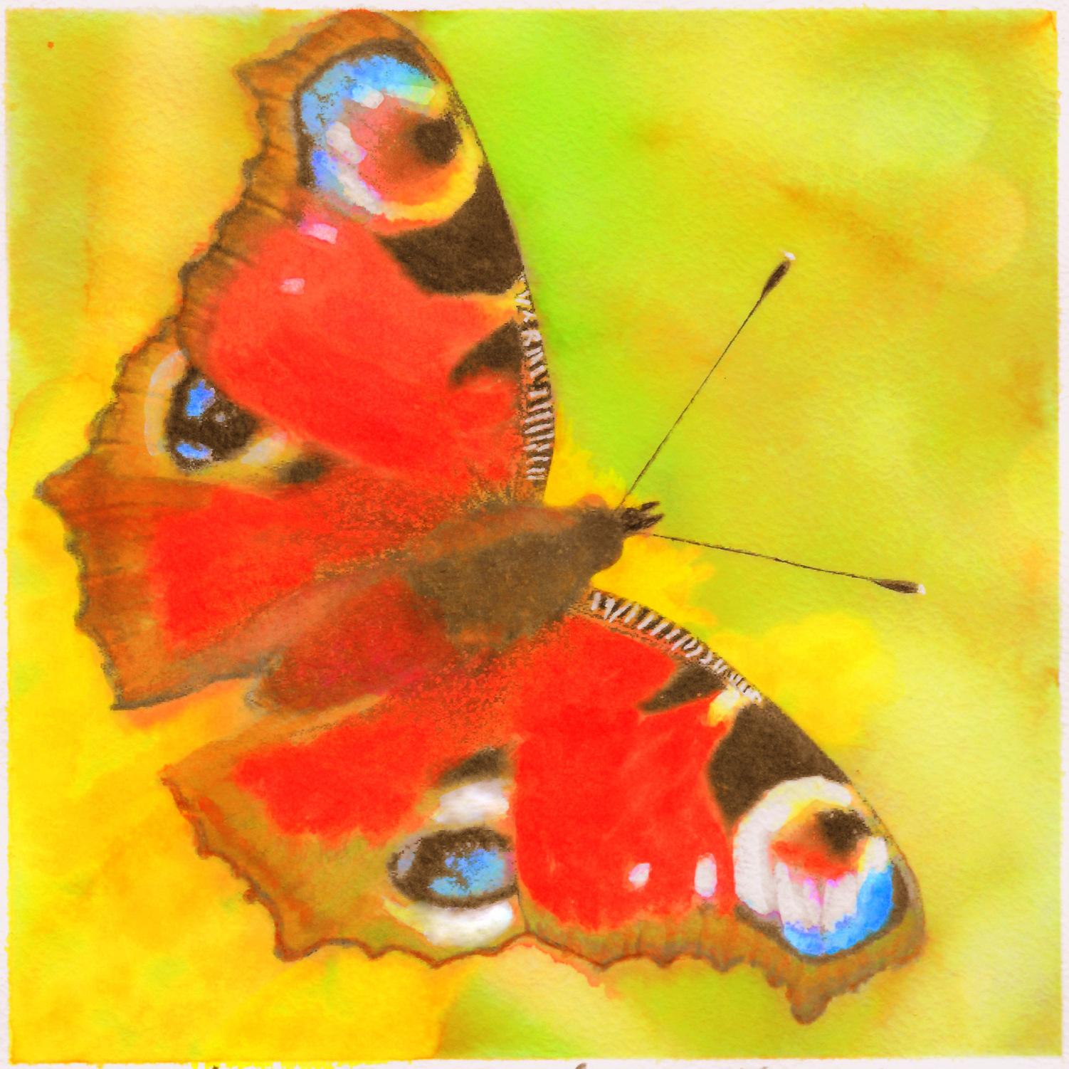 Eerste keer, Butterfly