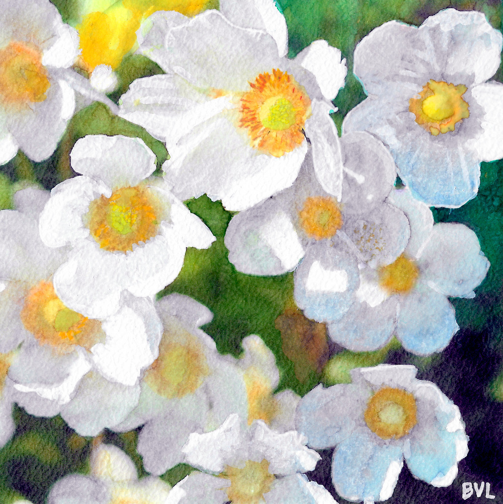 Fleures Blanches